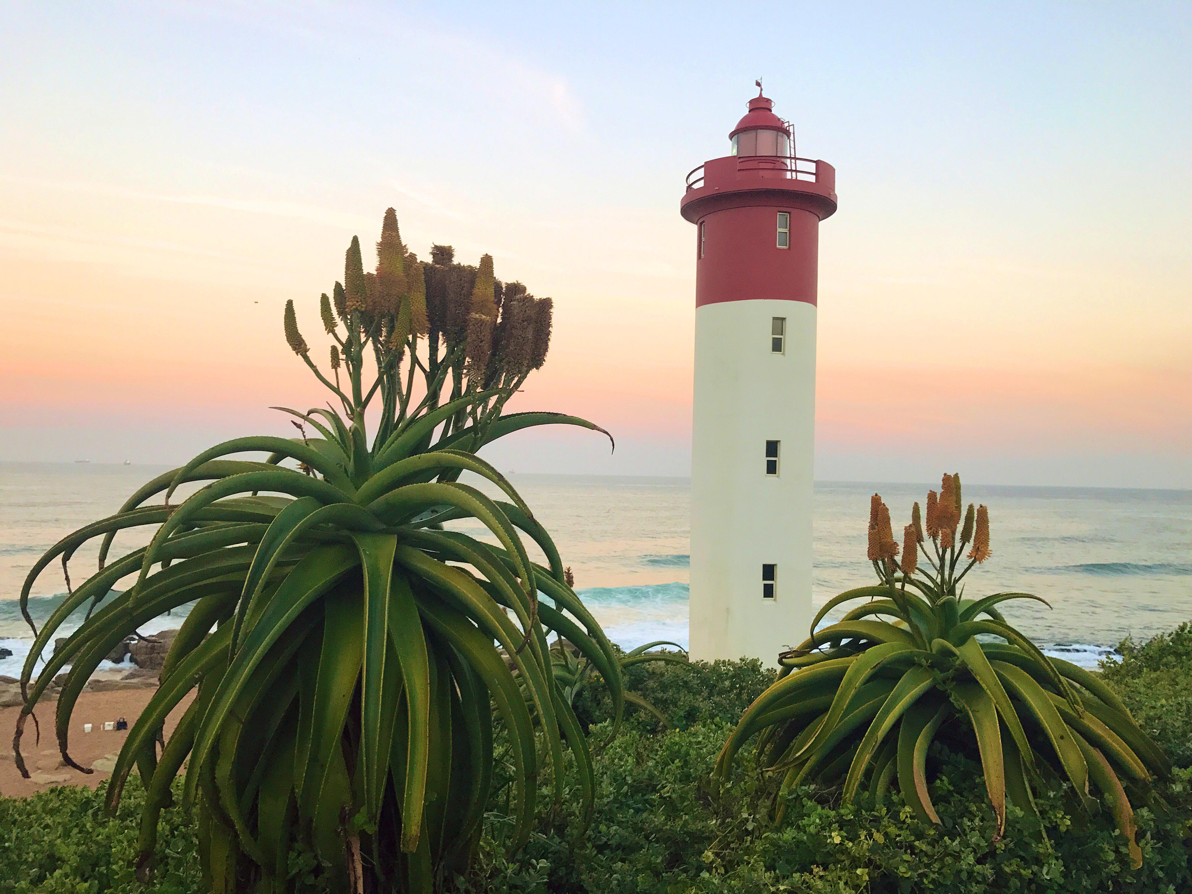 Aloe Durban